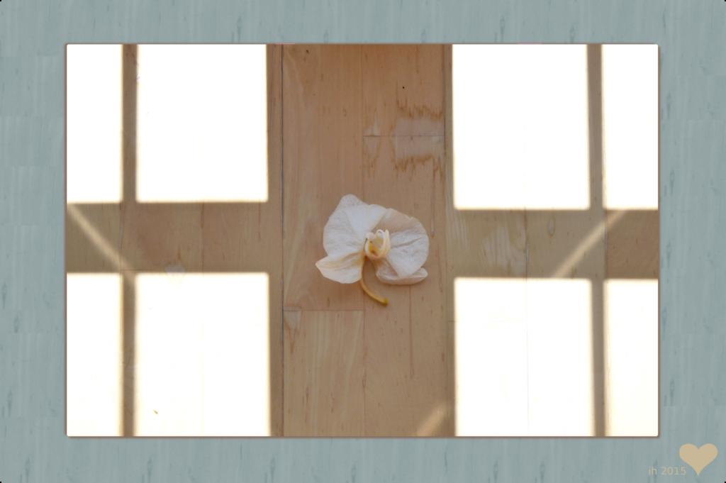 P1120348 Orchidee auf Holzboden k