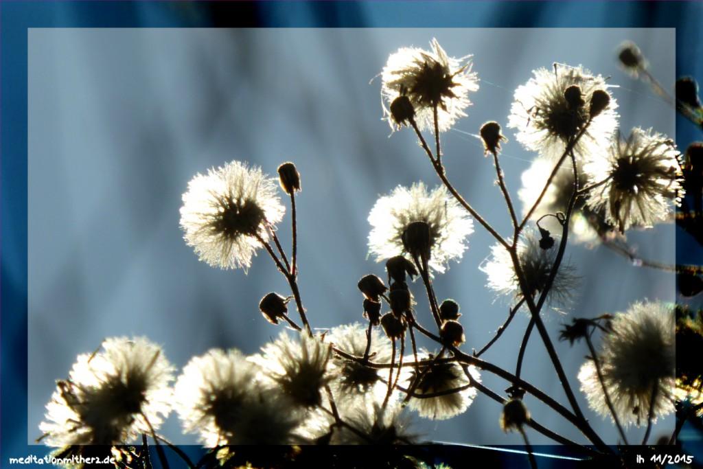 Meditation Herbstlicht