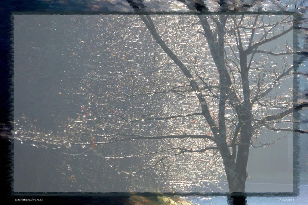 Meditation Baum Licht
