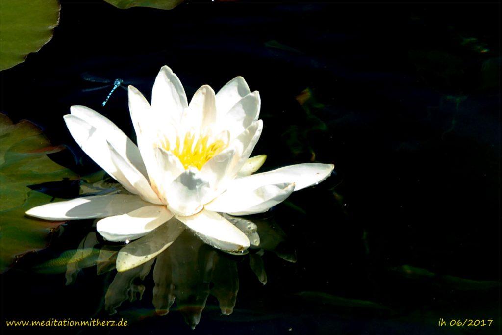 Meditation Licht